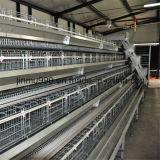 Gaiola automática da galinha do equipamento das aves domésticas para o uso da exploração agrícola