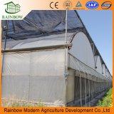 Túnel Multi Span Túnel de plástico PE Sistemas Hidropónicos Hormigón comercial agrícola