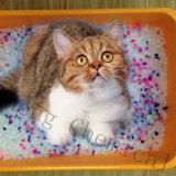 Silikagel-Katze-Sänfte mit dunkelblauer und roter Farbe