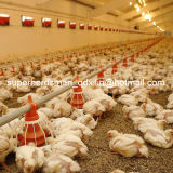 Broiler를 위한 가득 차있는 Set Automatic Poultry Equipments