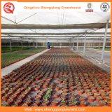 Sistema do Hydroponics das casas verdes da folha do PC para vegetais/flores/fruta