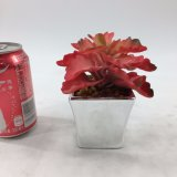 Mini Succulent di autunno del POT di ceramica artificiale della decorazione