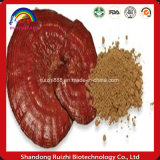 Té verde orgánico de Ganoderma de la seta de Ganoderma Lucidum Reishi