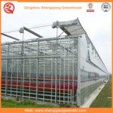換気装置が付いているポテトまたはトマトのポリカーボネートシートの温室