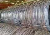 SAE1006/SAE1008 vergella/bobina Rod/ha rotolato la bobina del filo/Rod di acciaio