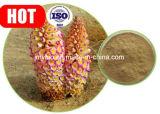 Estratto puro di Cistanche Tubulosa, glicosidi di Phenylethanoid 40%, 80%