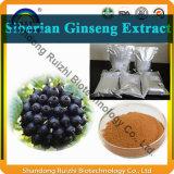 Factory Supply Ginseng Sibérien de haute qualité PE