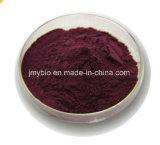 Antociani caldi dell'estratto della bacca di sambuco di vendita 3% - 25%; 4:1; 10:1