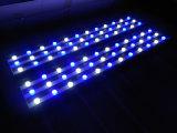 47inches White+Blue pour des lumières d'aquarium de l'évolution DEL de récif coralien