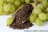Extracto de semilla de uva natural 95% OPC