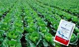 Do nitrogênio do fertilizante água completamente - NPK solúvel 12-36-12 + Te