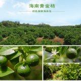 Reine natürliche/grüne Nahrung/gutes Geschmack-Kalk-Fruchtsaft-Puder