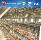 Nuove gabbie di batteria di strato dell'uovo delle attrezzature agricole con gli alimentatori