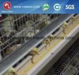 Matériel automatique de volaille de cage de poulet à rôtir pour la ferme sud-américaine