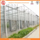 Serra dello strato del policarbonato di agricoltura per le verdure/giardino