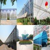 Holle Blad van de Muur van het polycarbonaat het Transparante Tweeling voor Dakraam