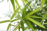 10%, 70% organisches Silikon-Bambusblatt-Auszug