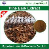 Poudre normale d'extrait d'écorce de pin