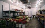 Sitio de conservación en cámara frigorífica para la flor