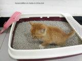 Eco freundliche Tofu-Katze-Sänfte