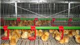 Matériel de volaille avec la Chambre préfabriquée pour un arrêt d'usine