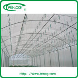 Tunnel Film mit Insect Net Greenhouse
