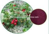 クランベリーのエキスVaccinum Macrocarponのアントシアニジン1-25%、Proanthocyanidins 1%-70%