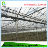 Multi Span Agriculture Film en plastique Vegetable Green House