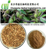 Siberian выдержка плодоовощ Cocklebur, выдержка Sibiricum Xanthium, Fructus Xanthii Xanthanol