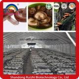 Fornecimento de ácido acídico natural fresco Composto correlacionado com pó Ahcc