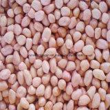 Grain rouge d'arachide de peau, type de Roud, Silihong