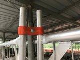 Le firme d'acciaio 2100mm x 2400mm hanno galvanizzato 42 micron dello zinco di strato di rete fissa provvisoria di spessore