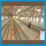 Équipement d'aviculture pour des couches de poulet