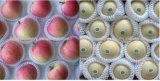 Erweiterndes Plastikfrucht-Ineinander greifen /Net, das Maschine herstellt