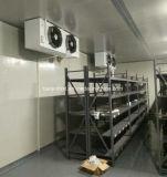 Panneau sandwich en PU de haute qualité Salle froide / entrepôt frigorifique aux fruits et légumes