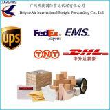La distribution exprès de courier de DHL d'expéditeur d'expédition de Chine vers les Maldives