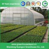 꽃과 식물성 설치를 위한 많은 갱도 온실