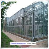 Hydroponicシステムが付いている中国の工場供給のガラス温室