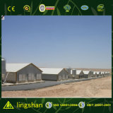 Casa econômica de criação de aves domésticas para a Argélia
