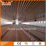 Strumentazione automatica moderna del pollame con la costruzione libera della tettoia della costruzione prefabbricata & di disegno