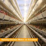 Тип клетка h самой лучшей конструкции Tianrui прочный автоматический цыпленка слоя батареи