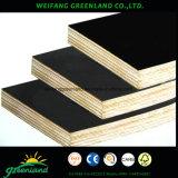Alta qualidade, folhosa, madeira compensada enfrentada da colagem película Phenolic com a película do preto, do Brown, a amarela e a vermelha para o uso da construção