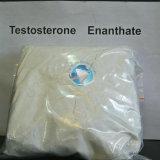 99.8%ステロイドはテストステロンのEnanthateステロイドのRawsの文書を粉にする