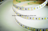 Luz de la venta directa LED de la fábrica con CE