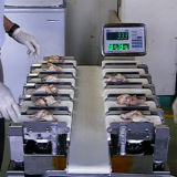 Máquina que corresponde con del peso para el pollo y la carne