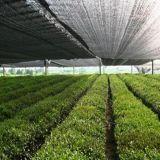 Rete di verdure del parasole della serra da vendere