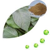Polifenoli dell'estratto del foglio del mirtillo 25% da UV