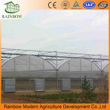 Venta caliente Po Film Agricultura Multi Span Invernadero para vegetales y flores