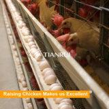 Ponedoras galvanizadas de las jaulas del pollo del acoplamiento soldado usadas