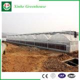 야채 꽃을%s 단 하나 경간 갱도 폴리에틸렌 필름 녹색 집